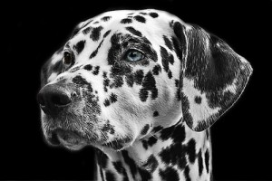 About Custom Canine Care