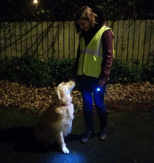 dog walking in the dark